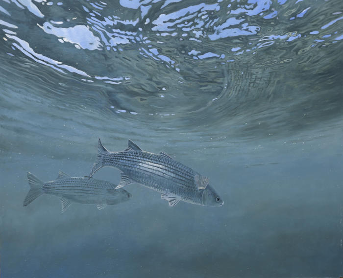 David Miller, Grey Mullet II , oil on board, 24 x 28 inches