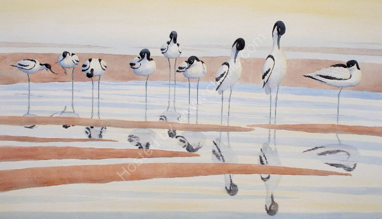 John Horton, Avocets preening Painted from a field sketch at RSPB Minsmere Framed size- 67 x 100 cms