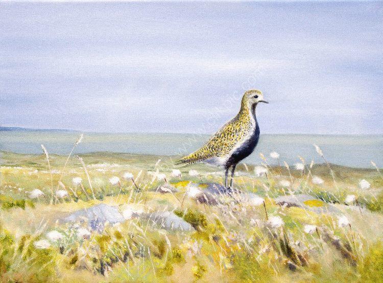 John Horton Golden Plover - Summer glory Golden plover in full summer plumage. Unframed oil- 41 x 30 cms.