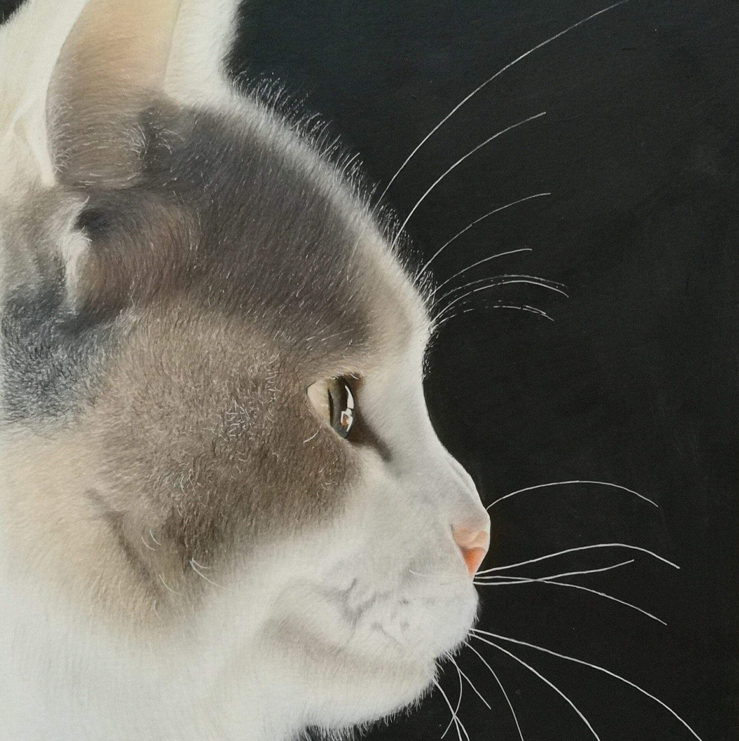 Jackson's Open Painting Prize Commended Entry of the Week - Lumi, a grey cat's profile on a black background by Michelle Wilson