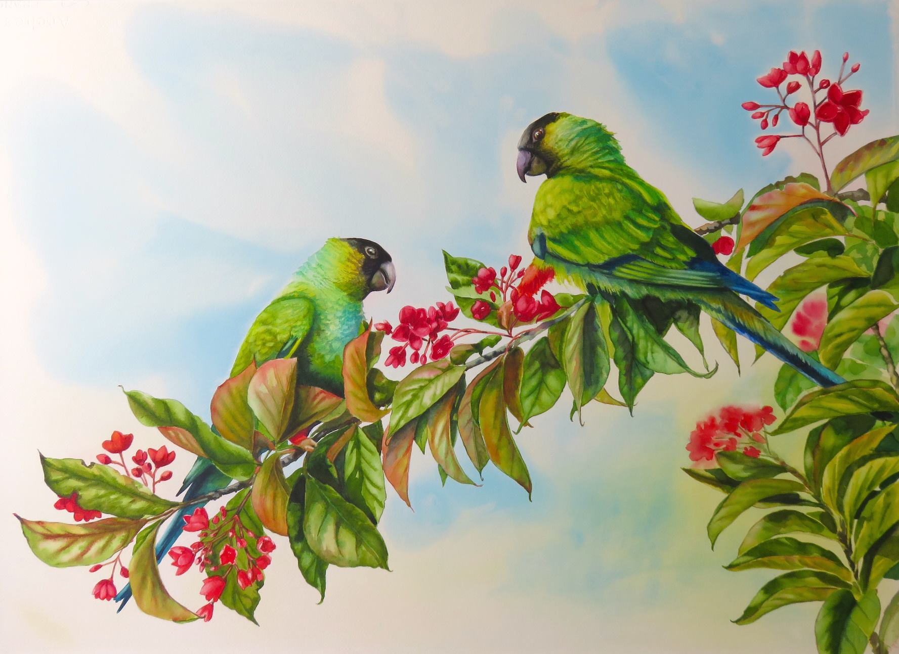 Nandays Parakeets - This Is A Private Conversation Watercolour Painting 21 x 29