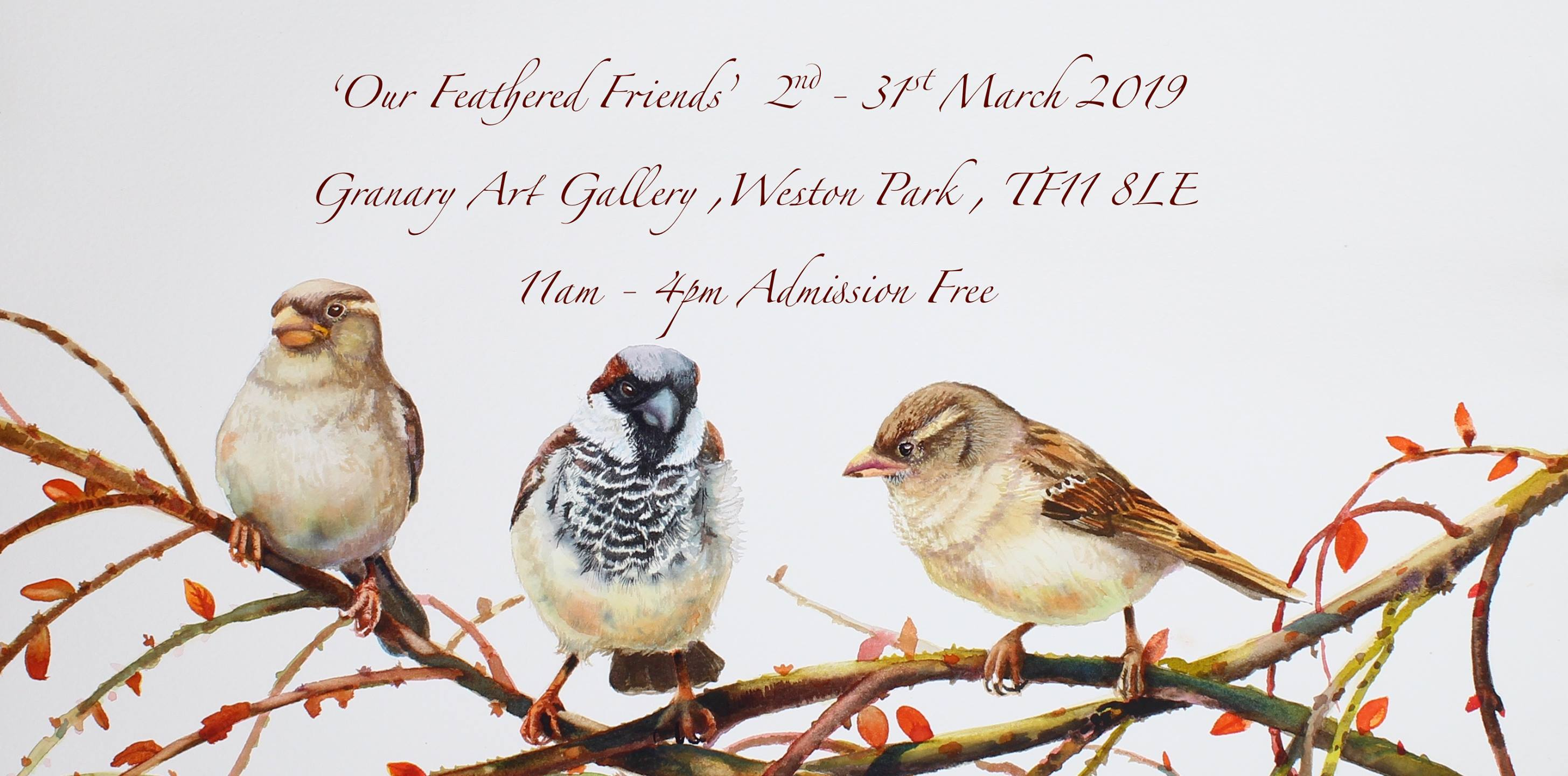 Press image feathered friends watercolour bird exhibition