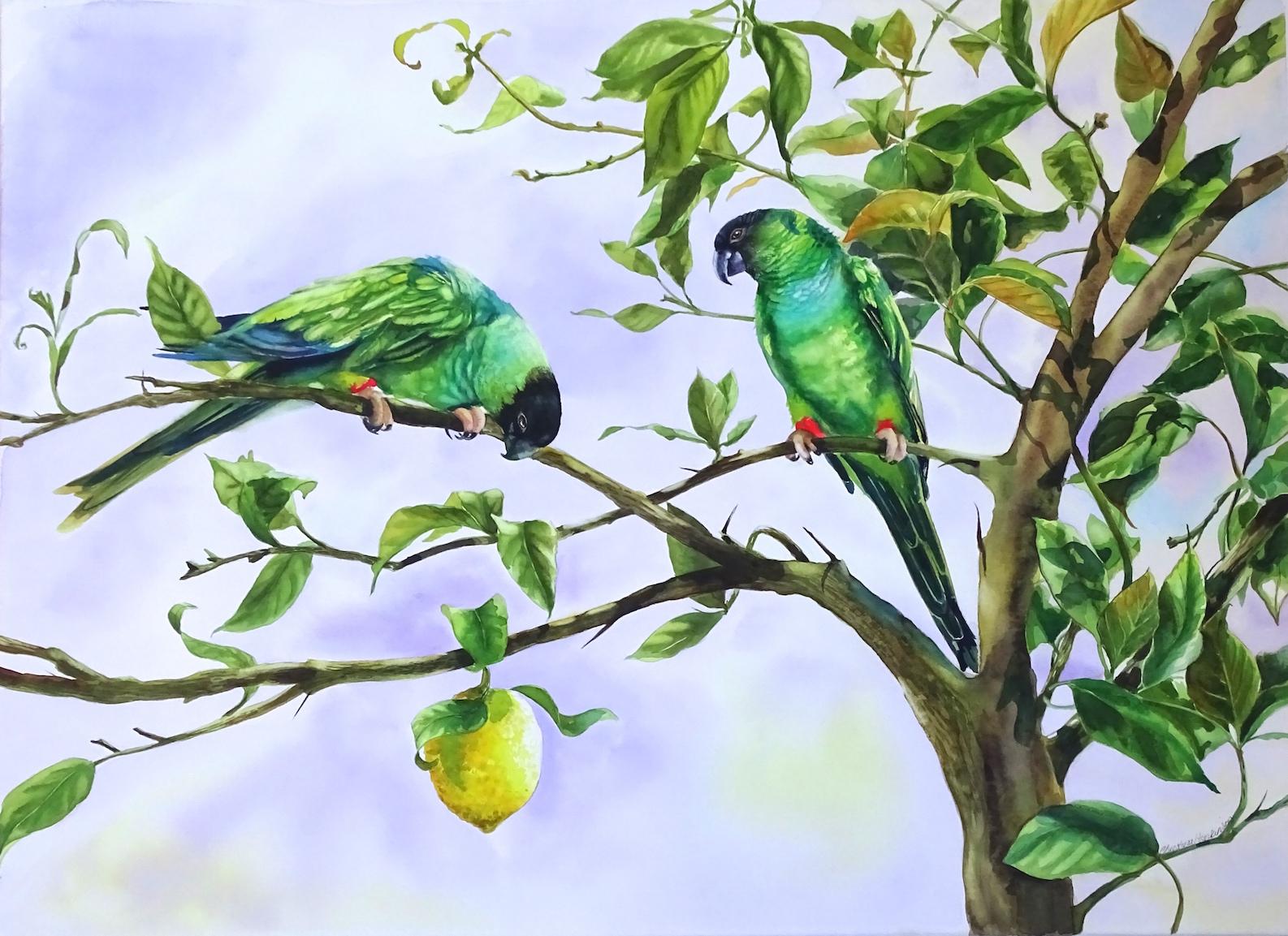 "Christina Hopkinson, The Last Lemon 2 , watercolour, (21""x29"")"