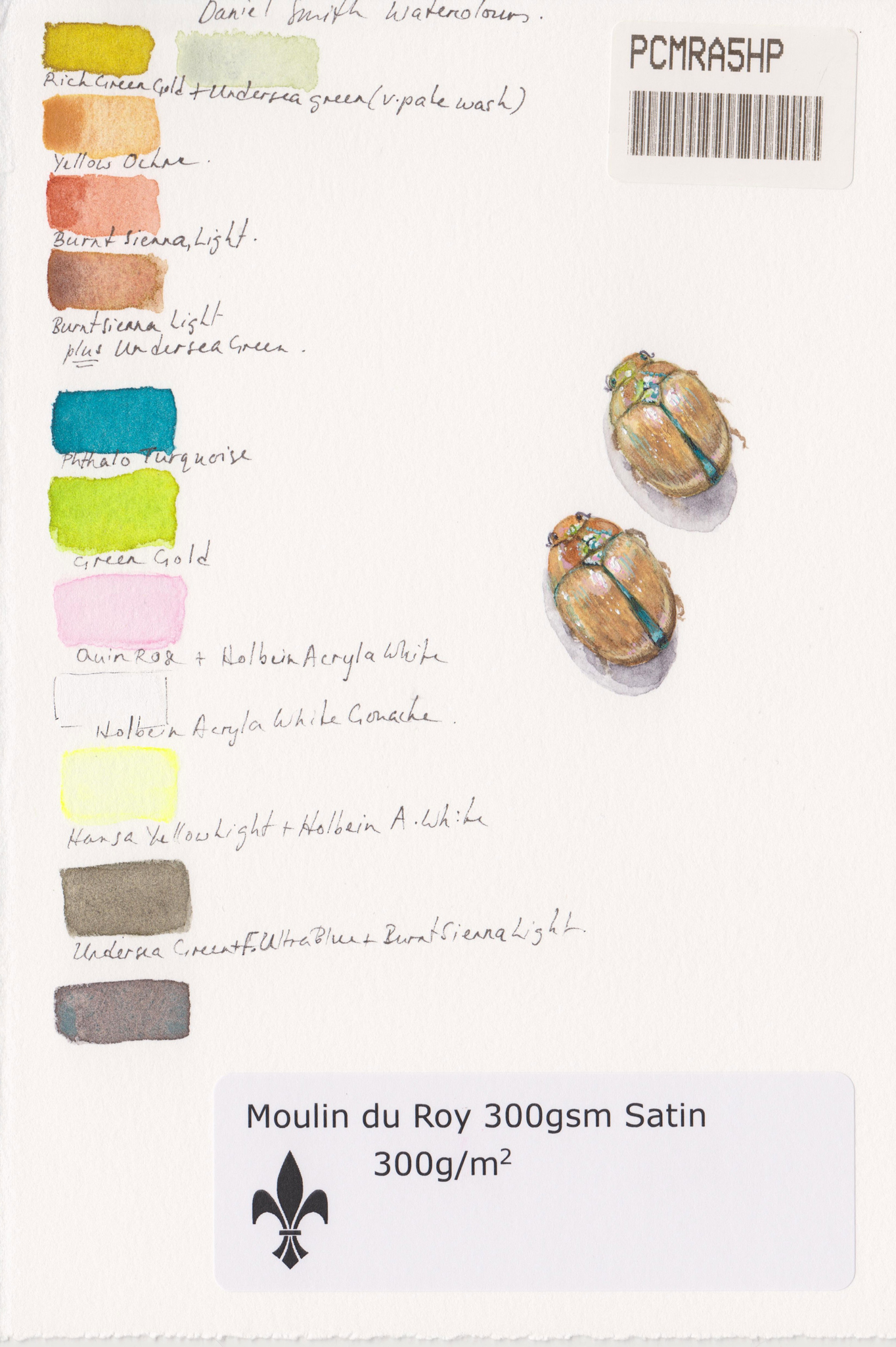 Daniel Smith swatches for the beetle
