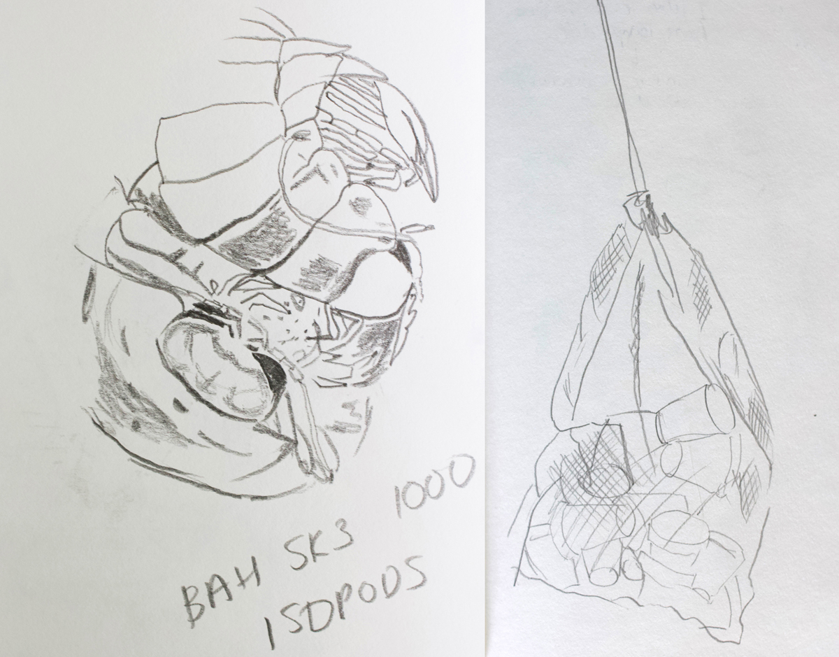 Sketch of an isopod and the net of cups, Alex Gould