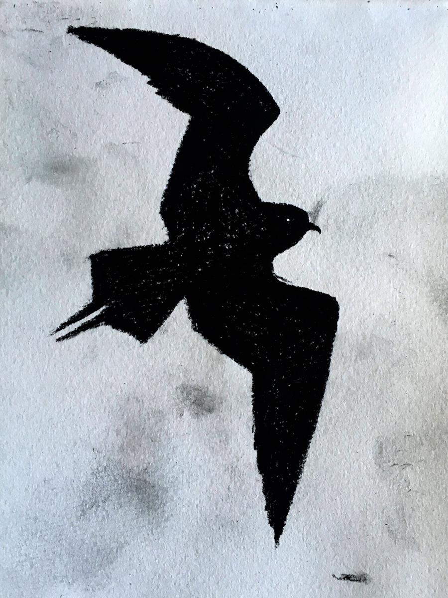 Arctic Skua Bird, Alexandra Gould
