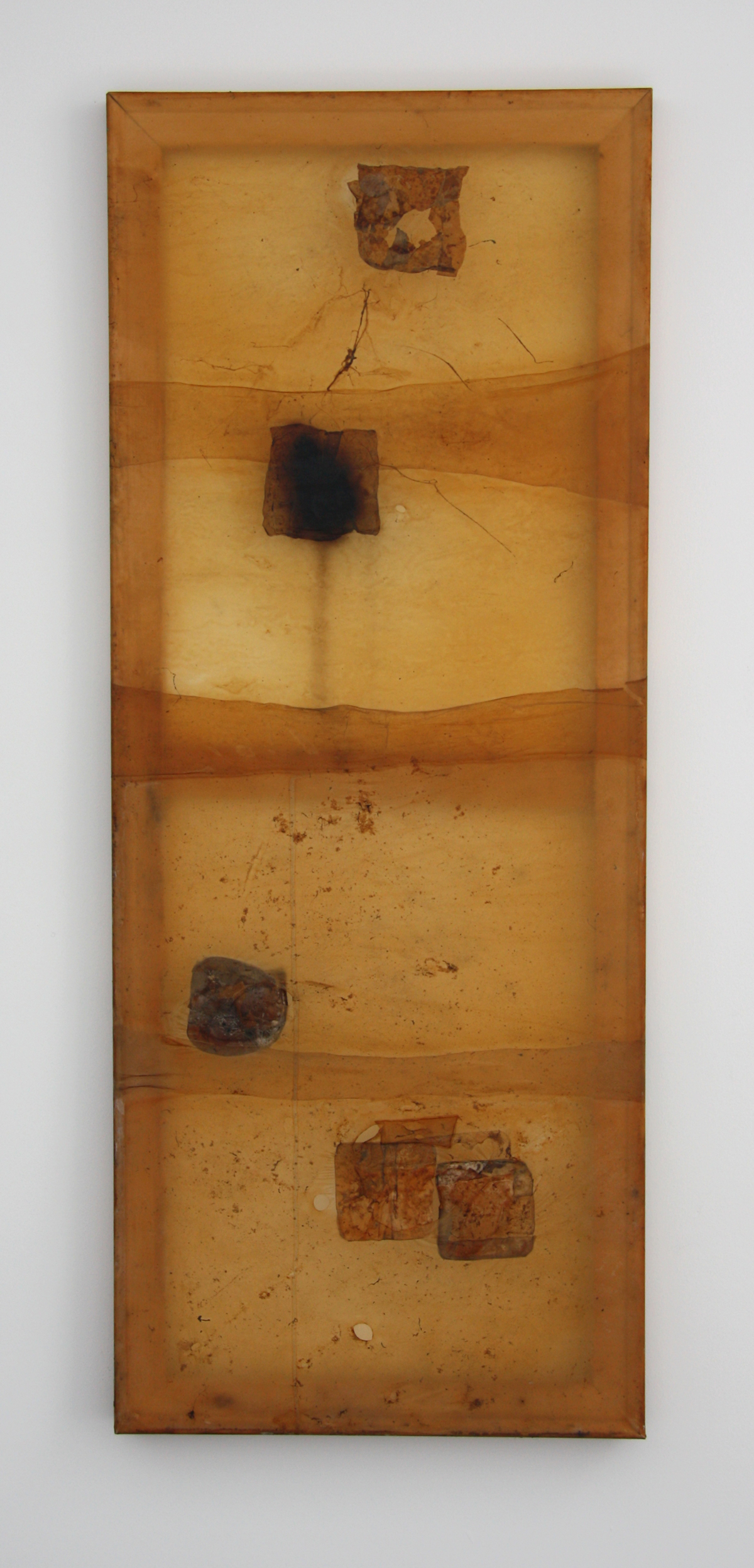 Mother (2016), Fiona Long, symbiotic culture of bacteria and yeasts, 50 x 160 cm