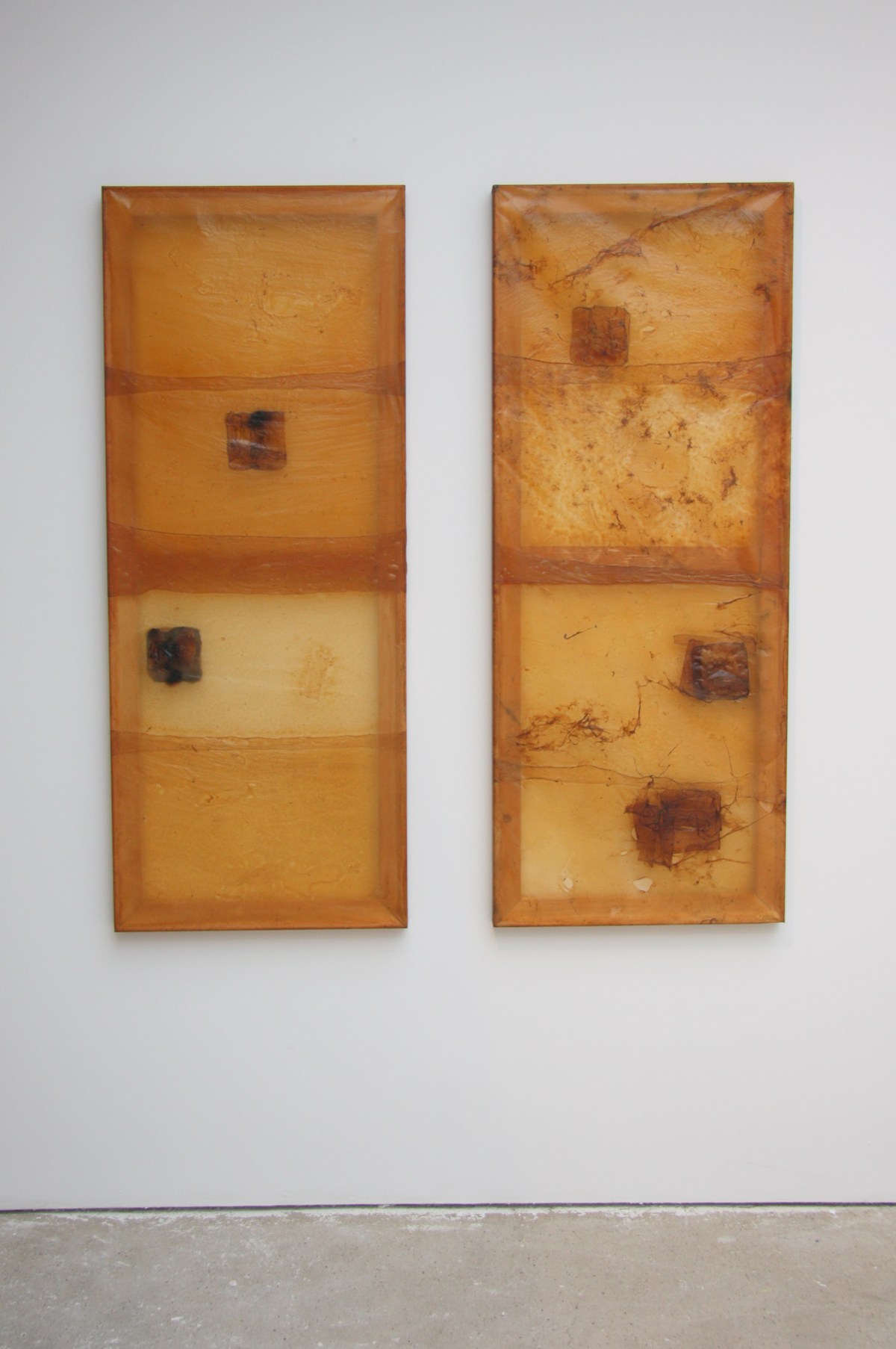 Mother and Daughter (2016), symbiotic culture of bacteria and yeasts, each 50 x 160 cm