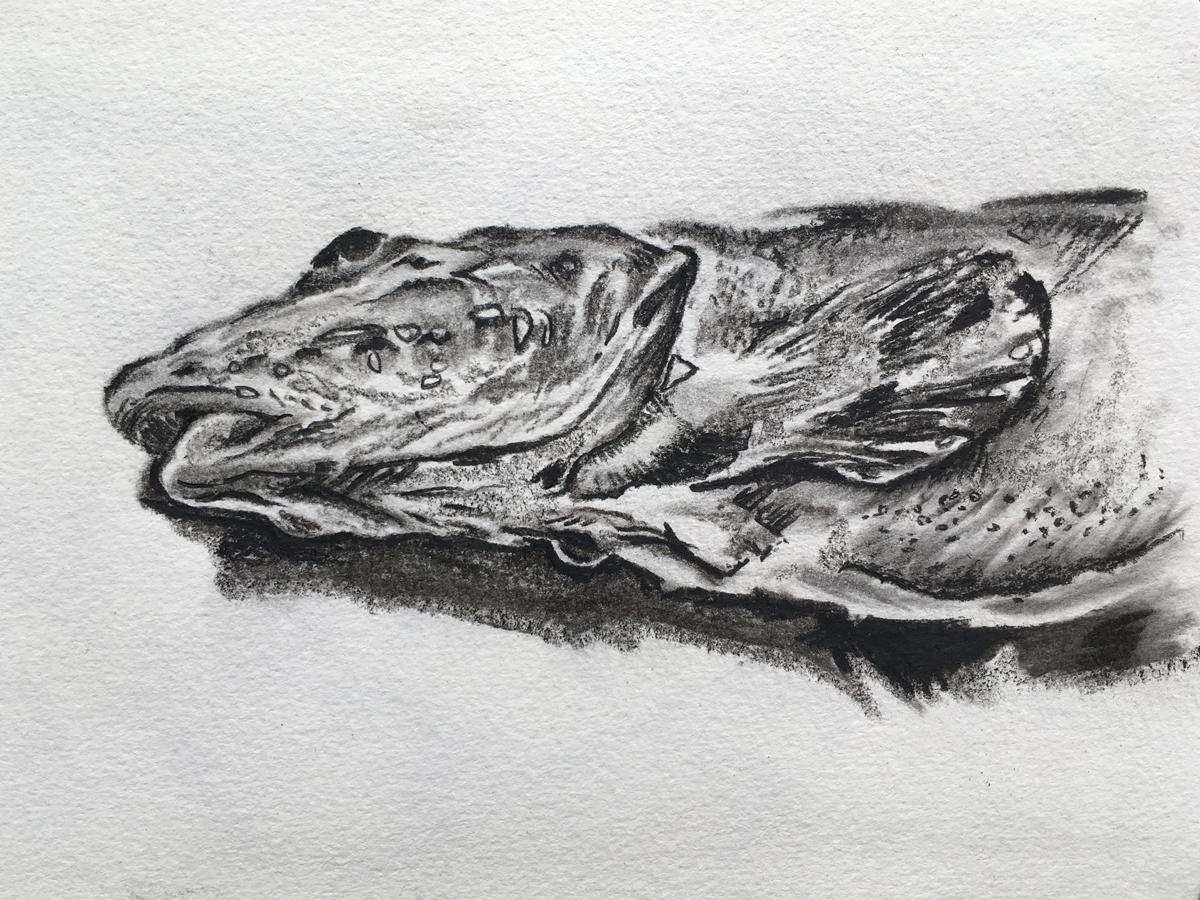 Molloy Fish, Alexandra Gould