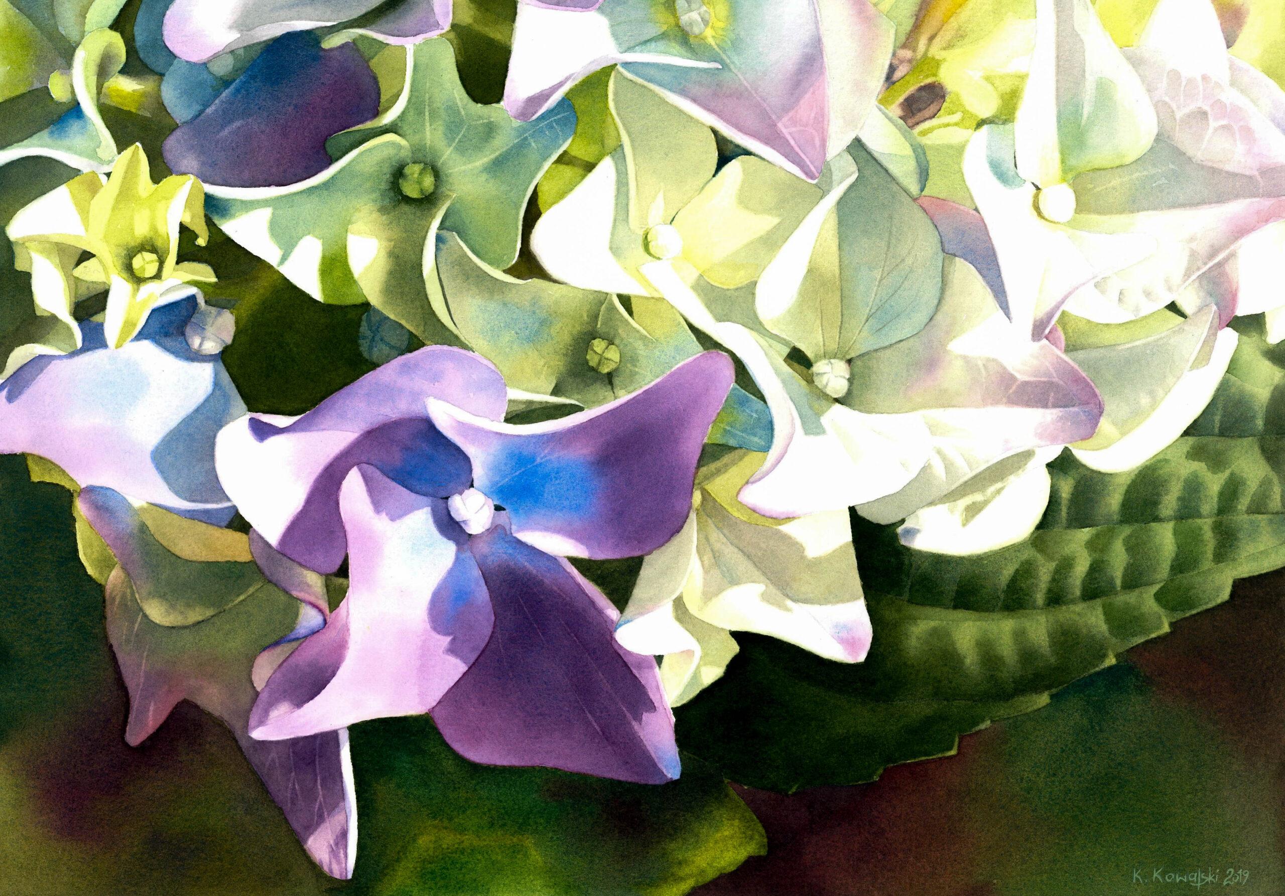 Hydrangea. Krzysztof Kowalski. Jackson's Painting Prize.