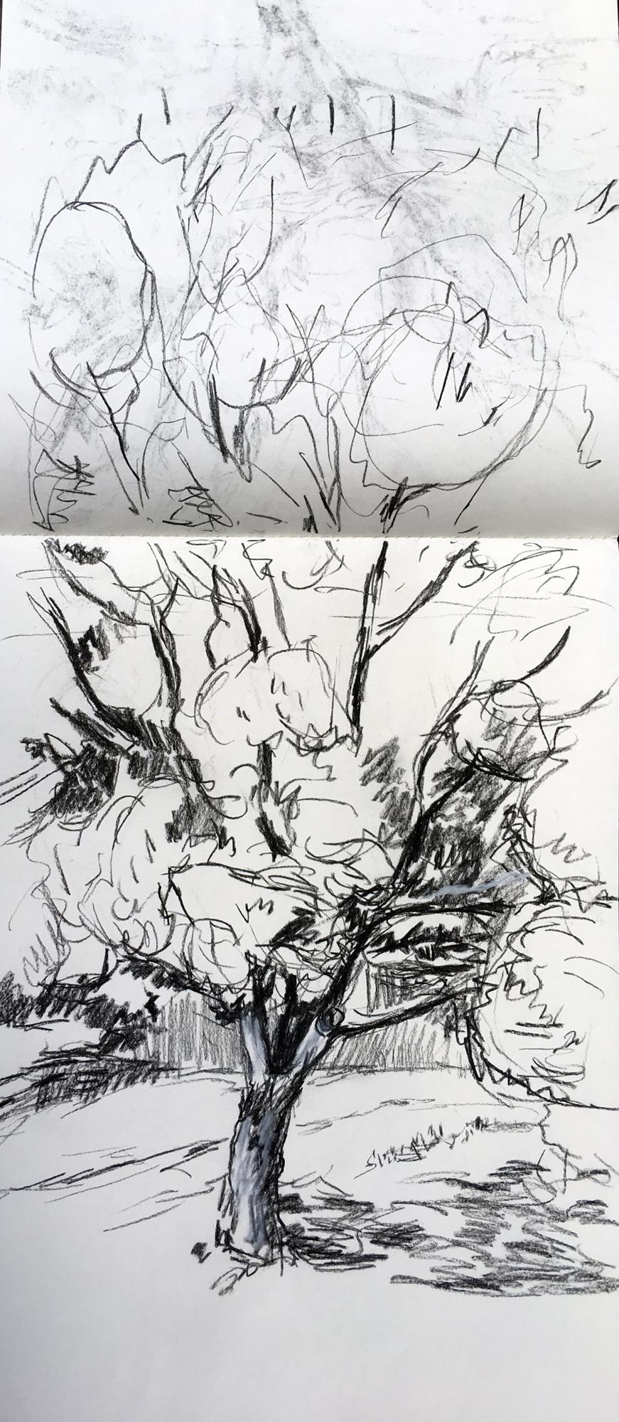 Clent Tree. Angelina Davis. Jackson's Painting Prize.