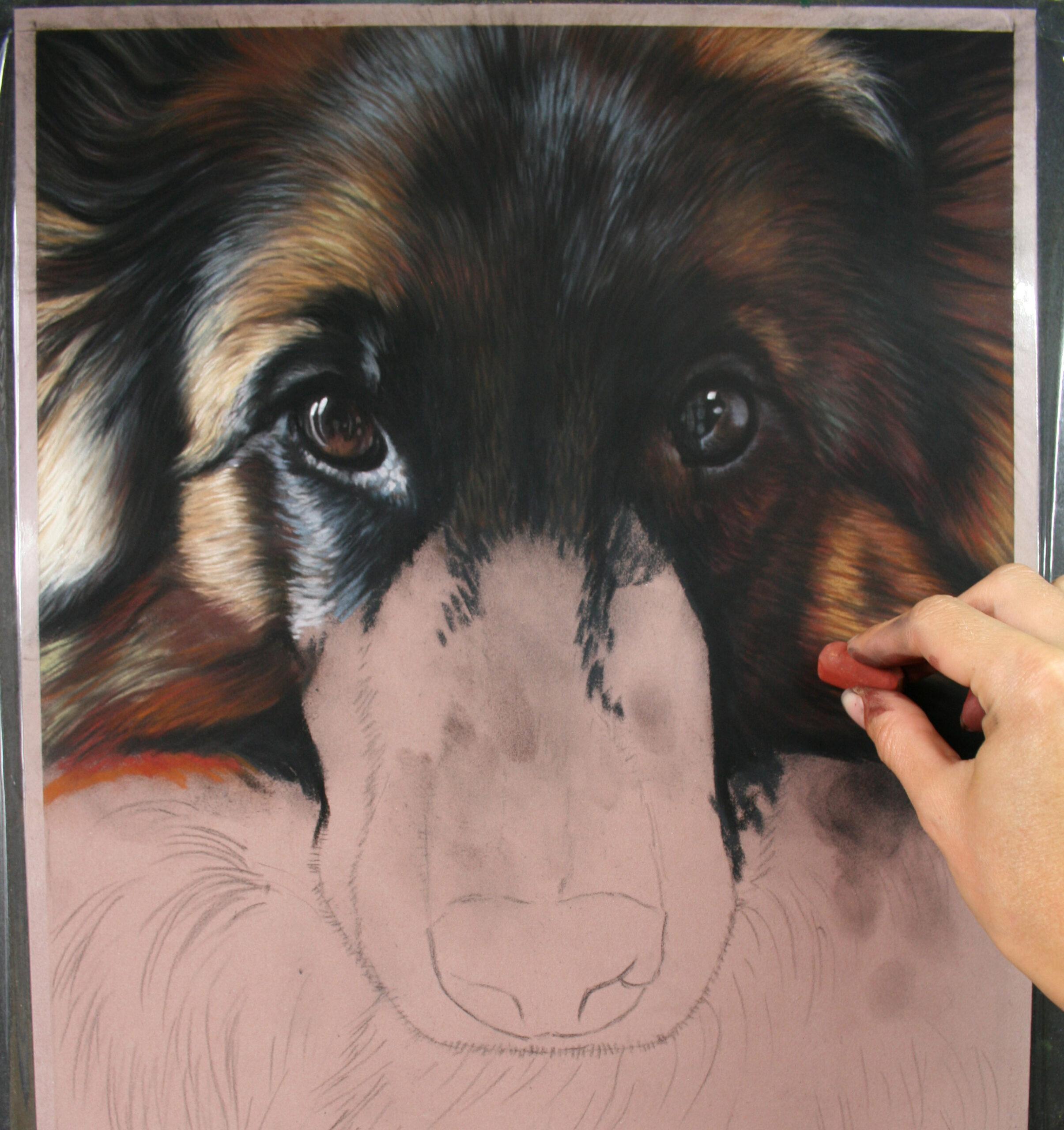WIP Pet Portrait. Emma Colbert. Jackson's Painting Prize.