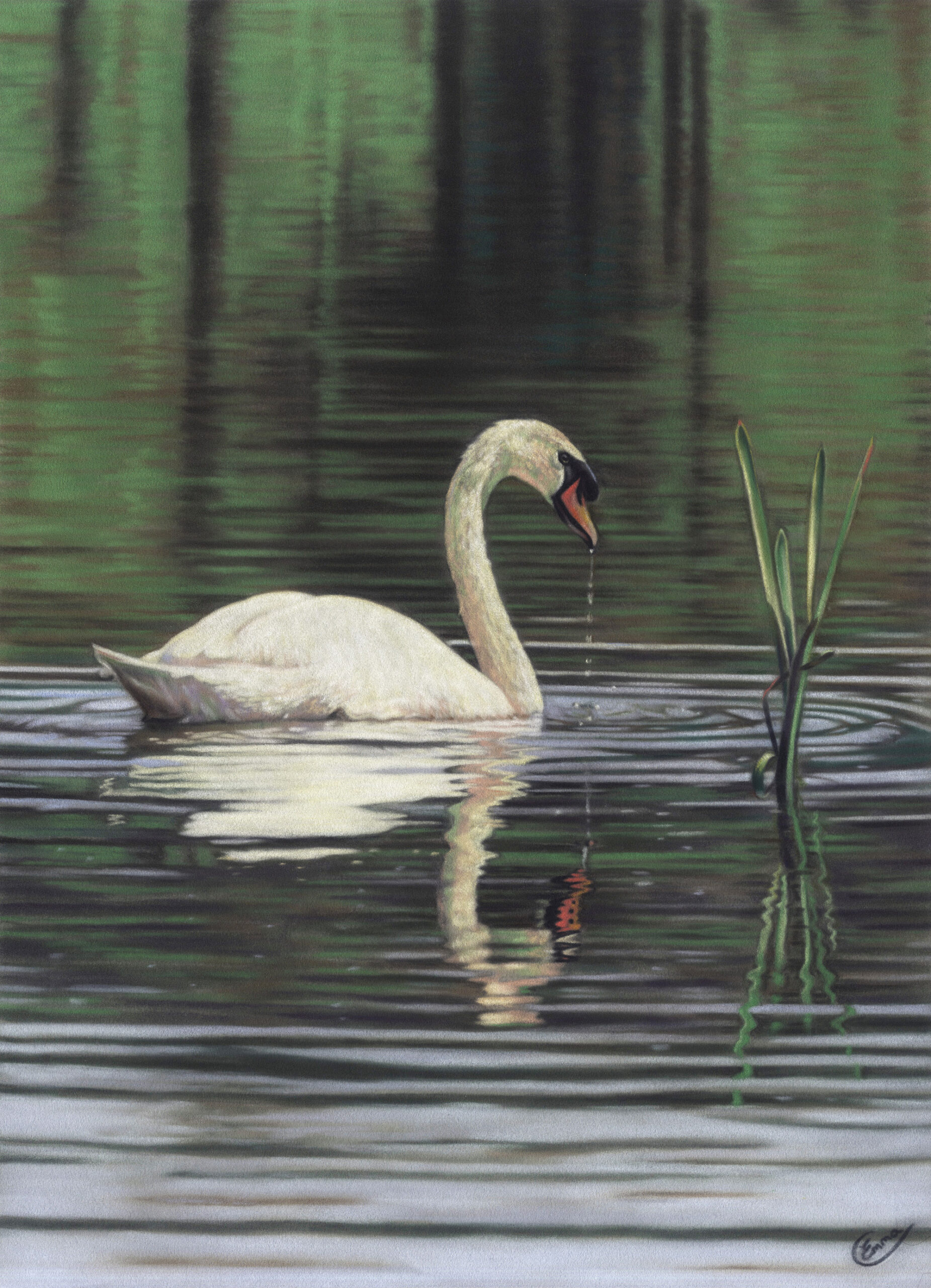 The Wild Swan. Emma Colbert. Jackson's Painting Prize.