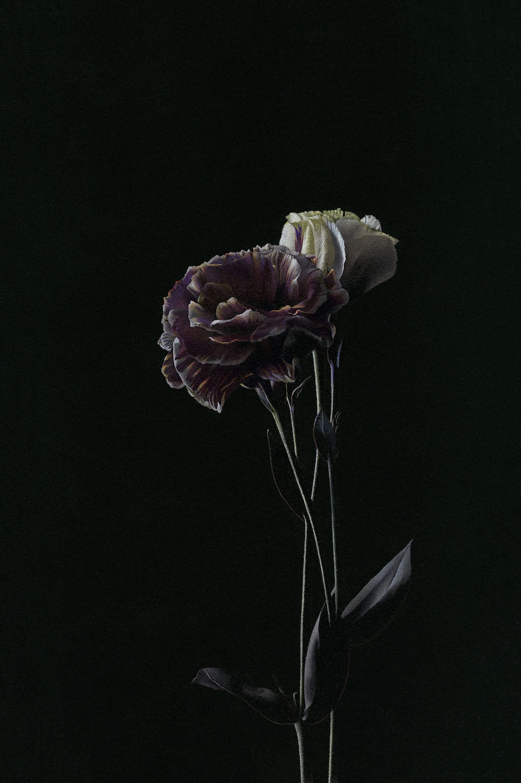Imagine. Megan Seiter. Jackson's Painting Prize.
