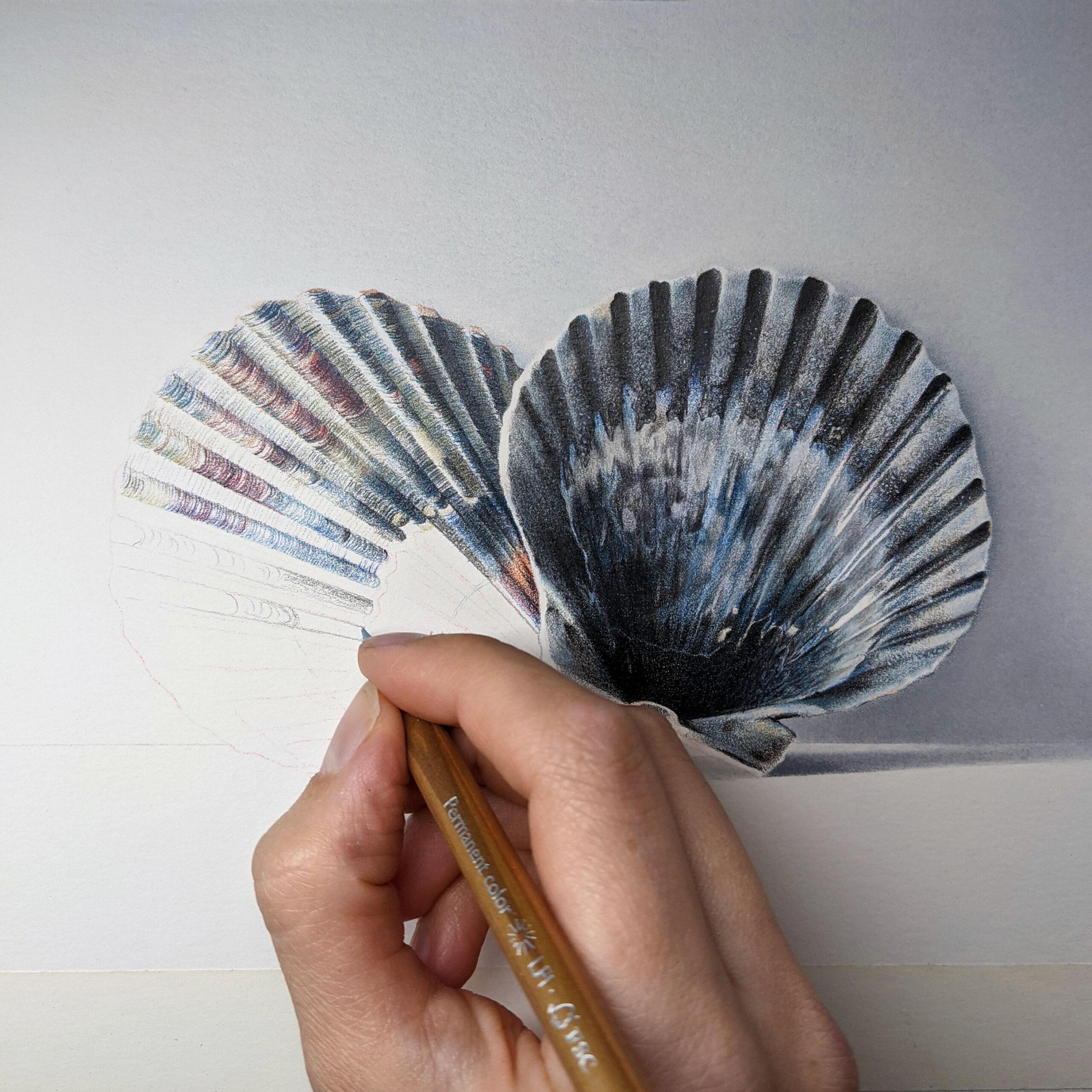 Nantucket Shells. Megan Seiter. Jackson's Painting Prize.