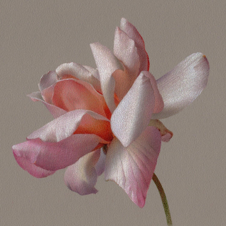 Rose. Megan Seiter. Jackson's Painting Prize.