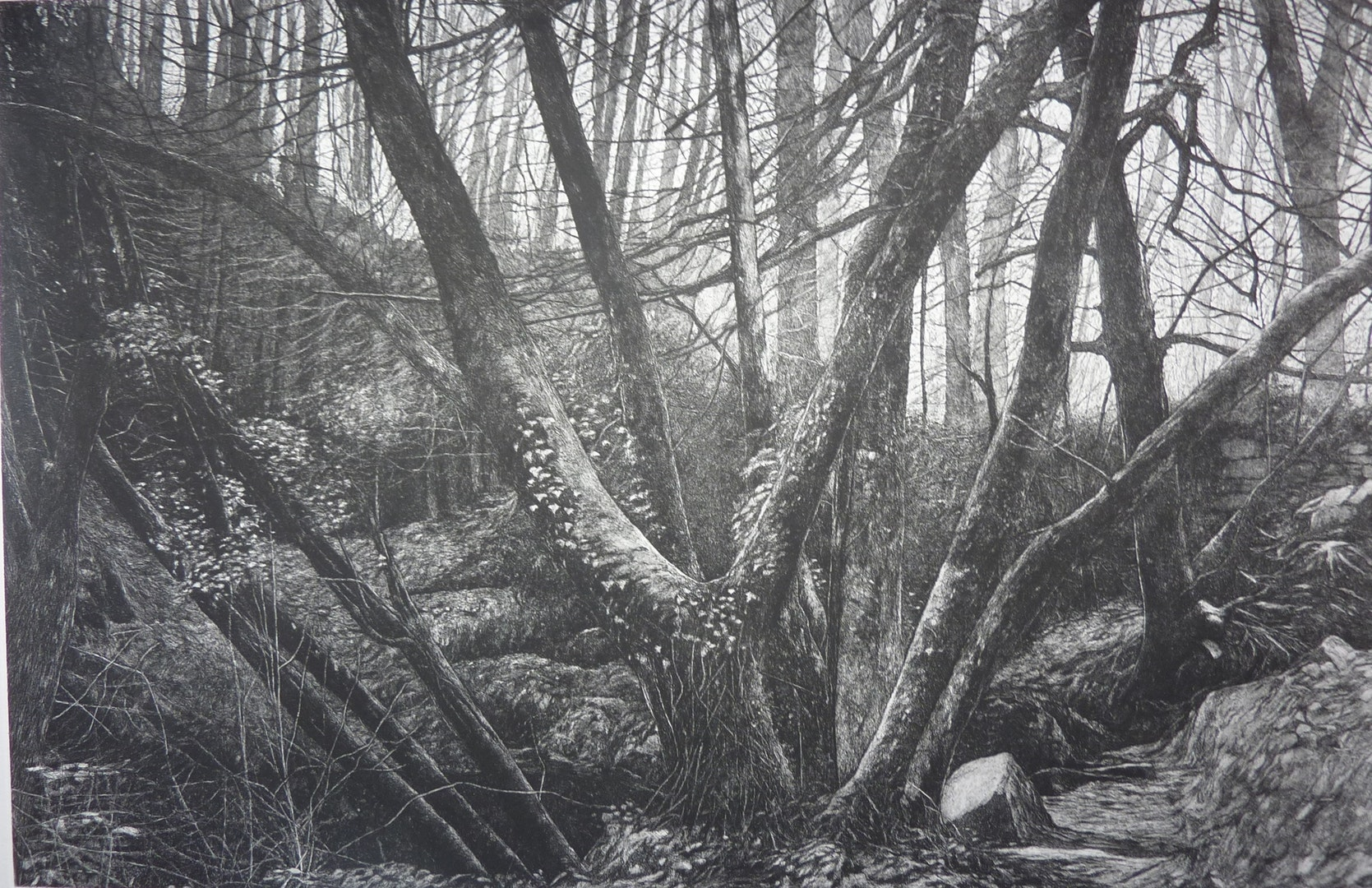 'Kennall Vale Cornwall Study 1', John Howard, Etching and aquatint on paper, 60.5 x 31 x 0.05 cm