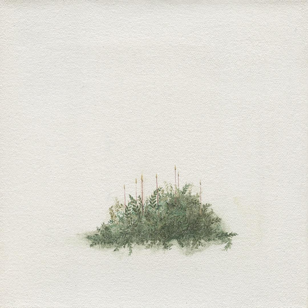 'Seven Sporophytes', Louise Lacaille, Oil on canvas, 20.5 x 20.5 x 1.8 cm