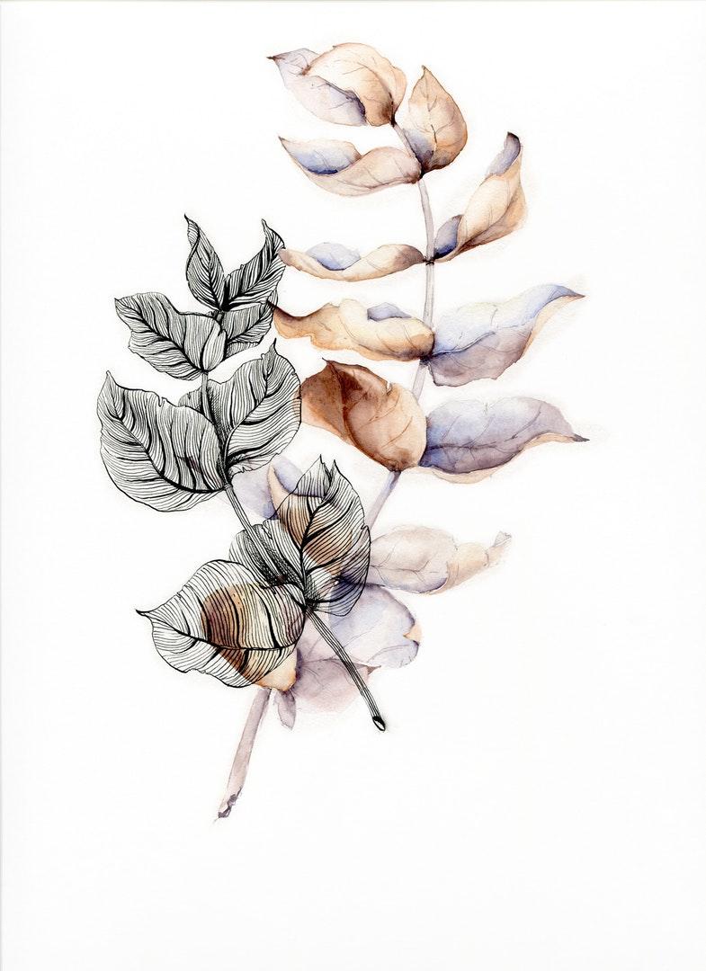 'Eucalyptus essence', Natalia Medovnik, Watercolor and ink, 23 x 25 cm