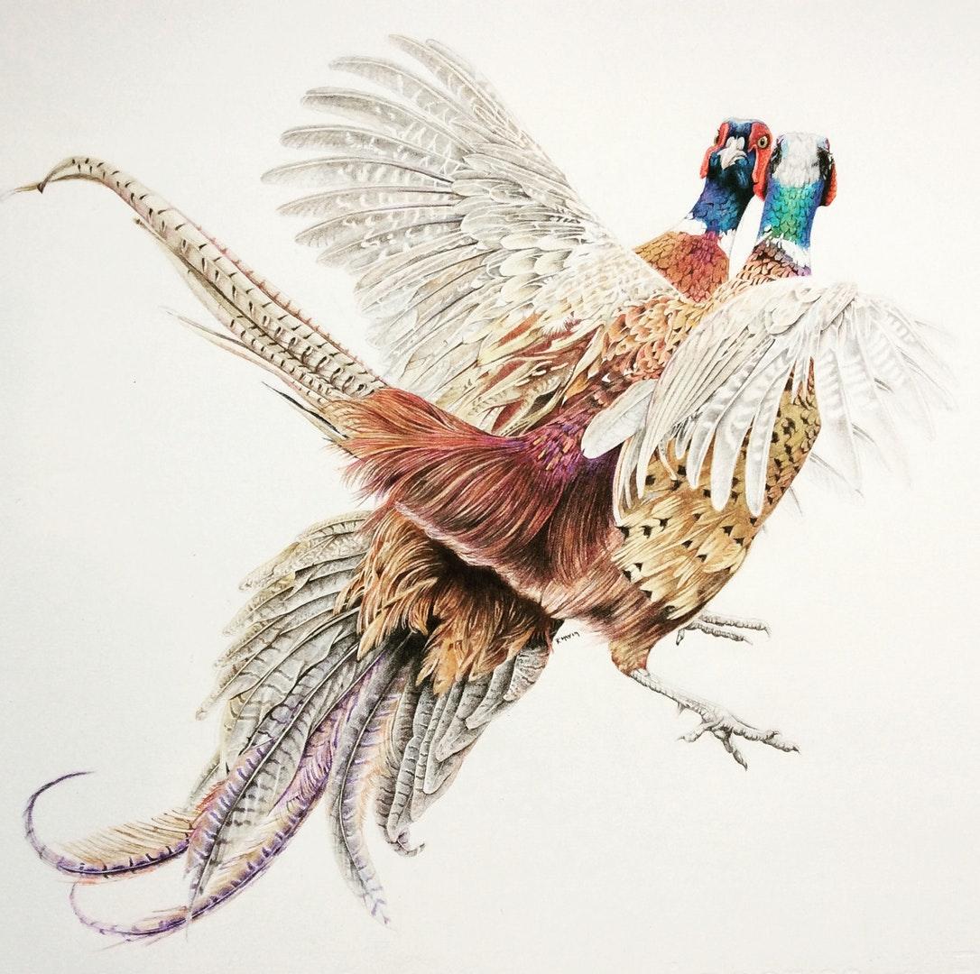 'En Guard', Rachel May, Coloured pencil on paper, 45 x 35 cm