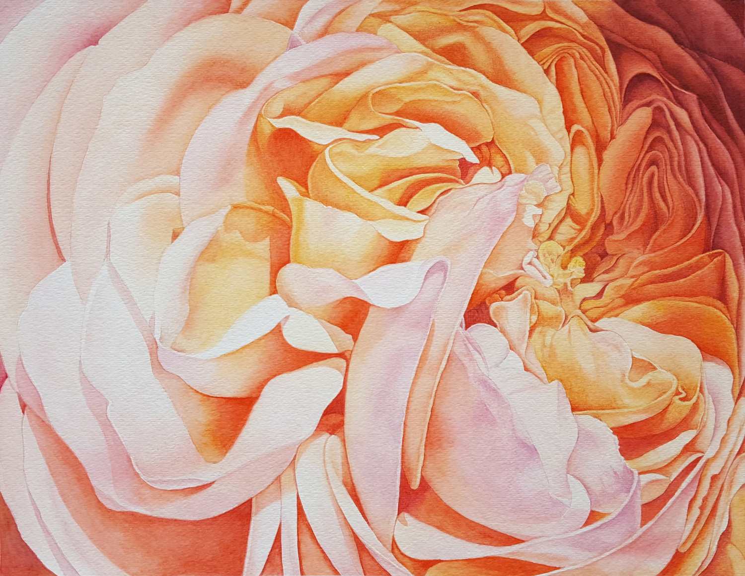 'Autumn Rose', Yan Ji, Watercolor on cold press watercolor paper, 25 x 33 cm