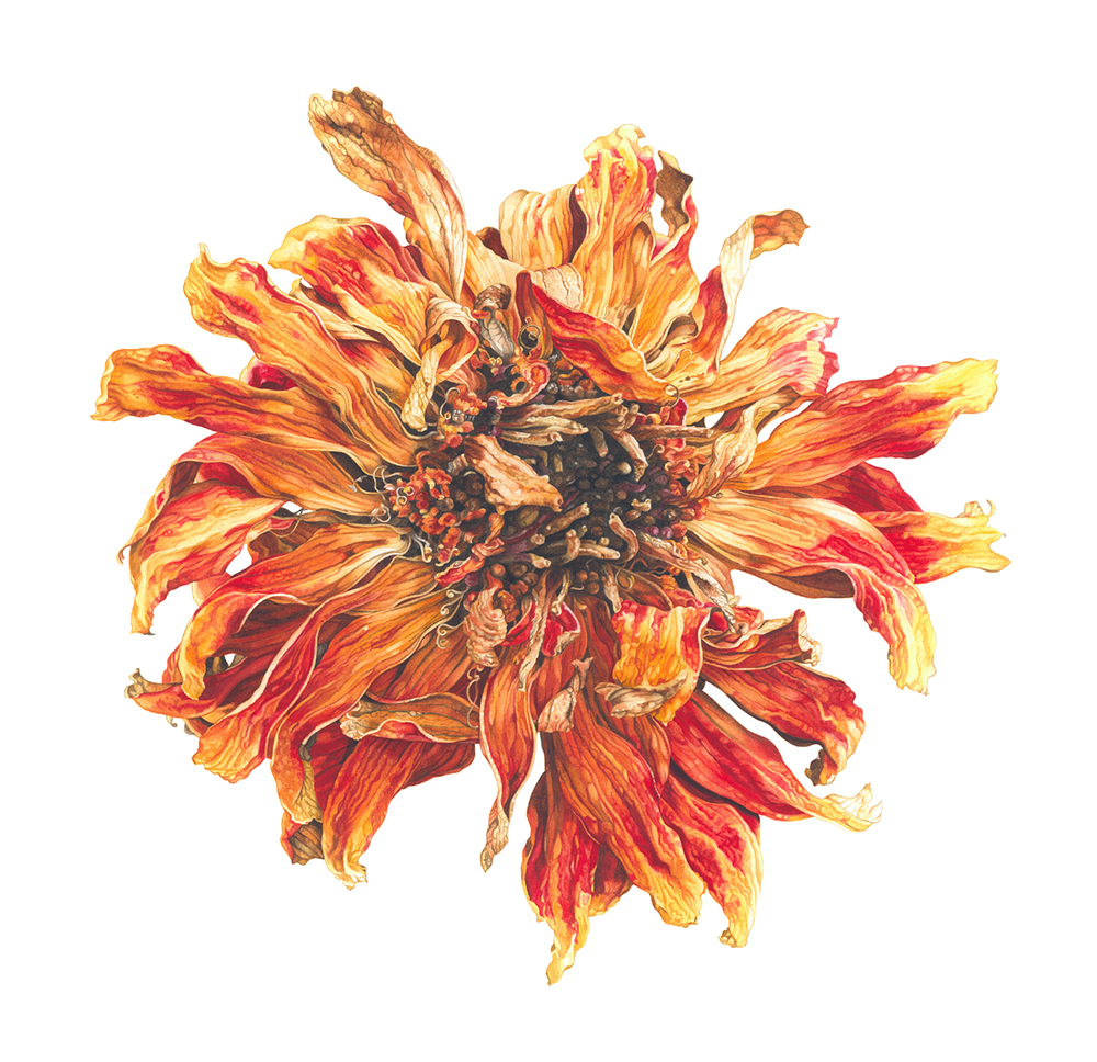 'Lion flower', Elizabeth Hellman, Watercolour on paper, 54 x 54 x 1.5 cm