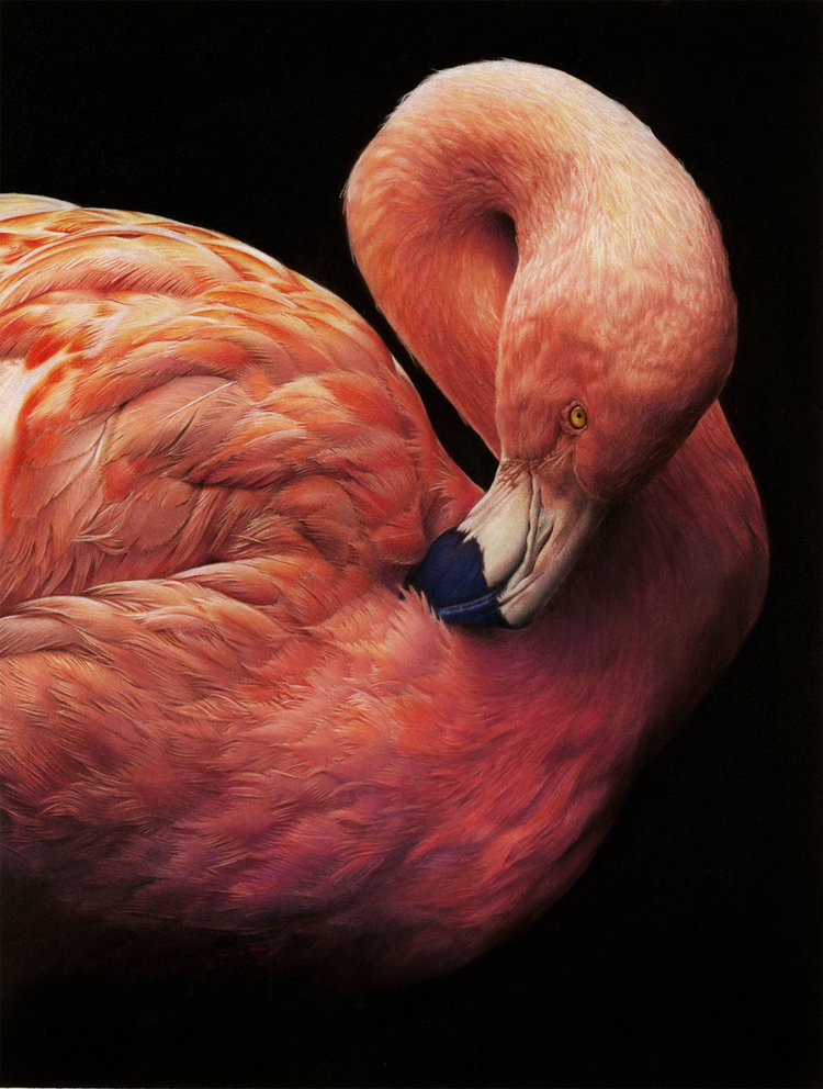 'Pretty in Pink', Nicola Wilkinson, Pencil & pastel on paper, 33.5 × 44.5 cm