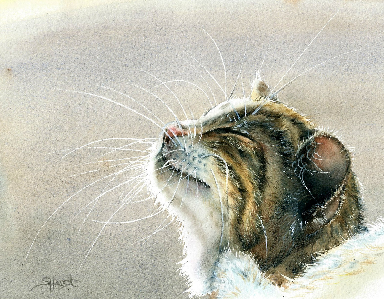 'Purring In The Sunshine', Sharon Hurst, Watercolour and pencil, 15.63 x 12.18 cm