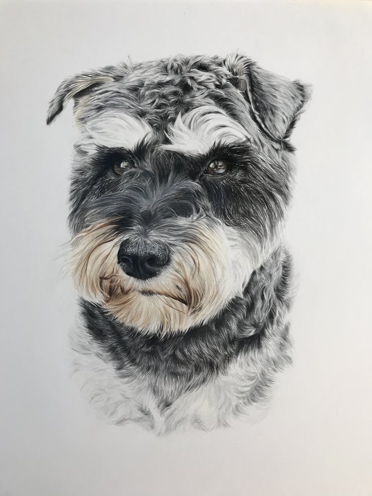 'Mabel', Rachael Porosa, Colour pencil on paper, 35 x 43 cm