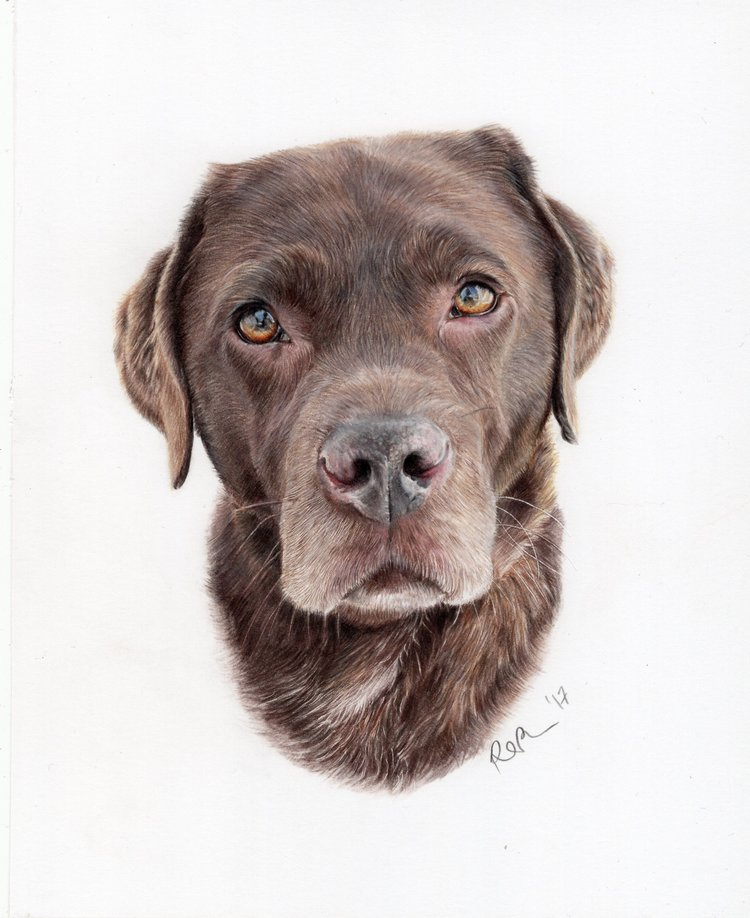 'Toby', Rachael Porosa, Colour pencil on paper, 20 x 25 cm