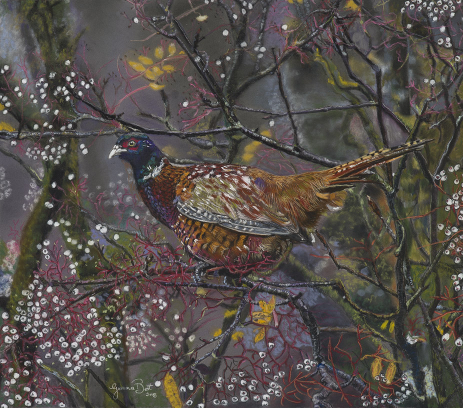 'Pheasant in woods', Gemma Best, Unison pastel on clairefontaine pastel matt, 12 x 10 cm