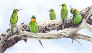'blue cheeked beeaters', Alan Woollett, Polychromos pencils on fabriano paper, 32 x 50 cm