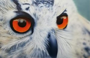 'The wise old owl', Donna lowson, Waterbased h2o airbrush paint on lana vanguard paper, 22 x 29 cm