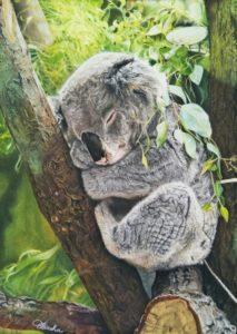 'Sleeping Koala', Eliasha Tan, Pastel, 40 x 30 cm
