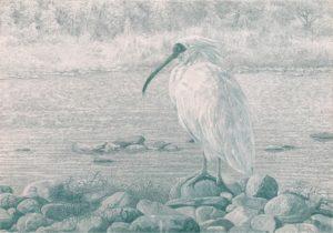 'Thriving of a Life', Erhu Zhang, watercolor pencil, 38 x 52 cm