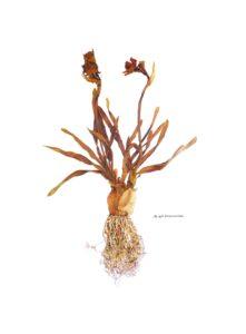 'fig. 49b Disconcertion', Jean Paul Beumer, Derwent Artist's colour pencils on 200 grs canson paper, 166 x 122 cm