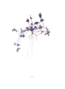 'fig. 50 Pride', Jean Paul Beumer, Derwent Artists Colour Pencils on 200 grs Canson paper, 166 x 122 cm