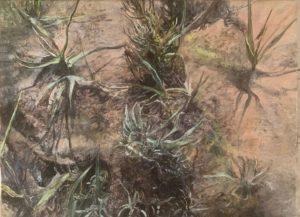 'Dark marsh - cord grass', Judith Tucker, Oil on linen, 30 x 40 cm