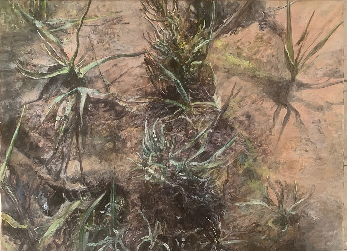 'Dark marsh - cord grass', Judith Tucker, Oil on linen, 30 x 40 cm