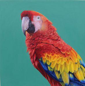 'Macaw', Julie Burdon-stone, Acrylic on wooden panel, 30 x 30 cm