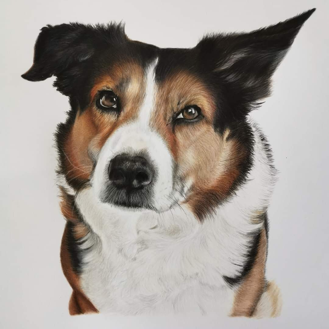 'Mick', Michelle Wilson, Oil based coloured pencils on multi media paper, 43 x 43 cm