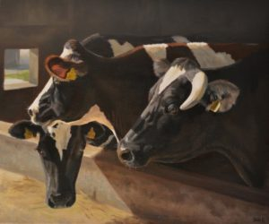 'Cows, October', Sara Hodson, Oil on canvas, 50 x 60 cm