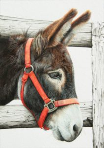 'little donkey', Sharon Marie Clarke-Marris, Acrylic, pen and ink on paper, 29.7 x 21 cm