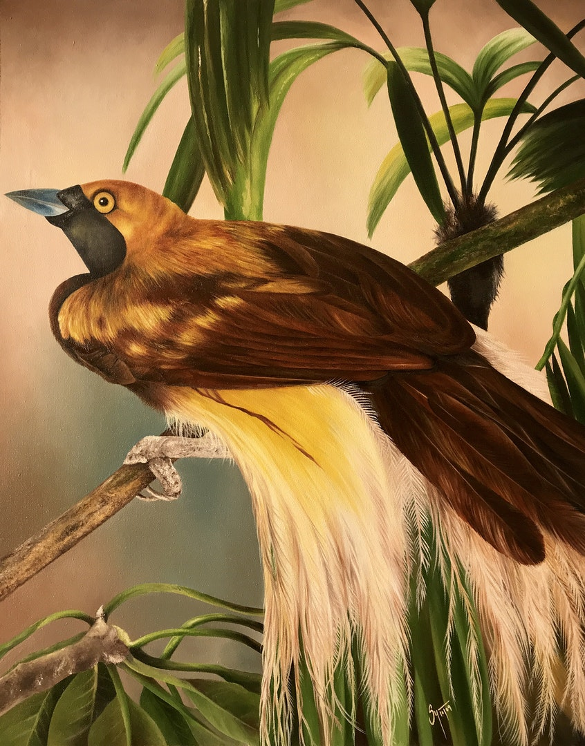 'Bird of Paradise', Sushmaya Yadav, Oil on canvas, 75 x 60 cm