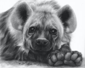 'Adorable Hyena', Danguole Serstinskaja, Oil on paper, 40 x 50 cm
