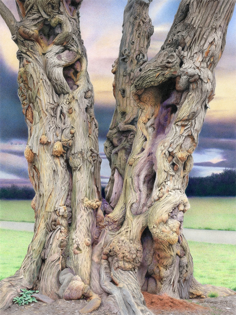 'Tree of Witness', Denise Howard, CPSA, CPX, UKCPS, MPAS, Coloured pencil on paper, 50.8 x 38.1 cm