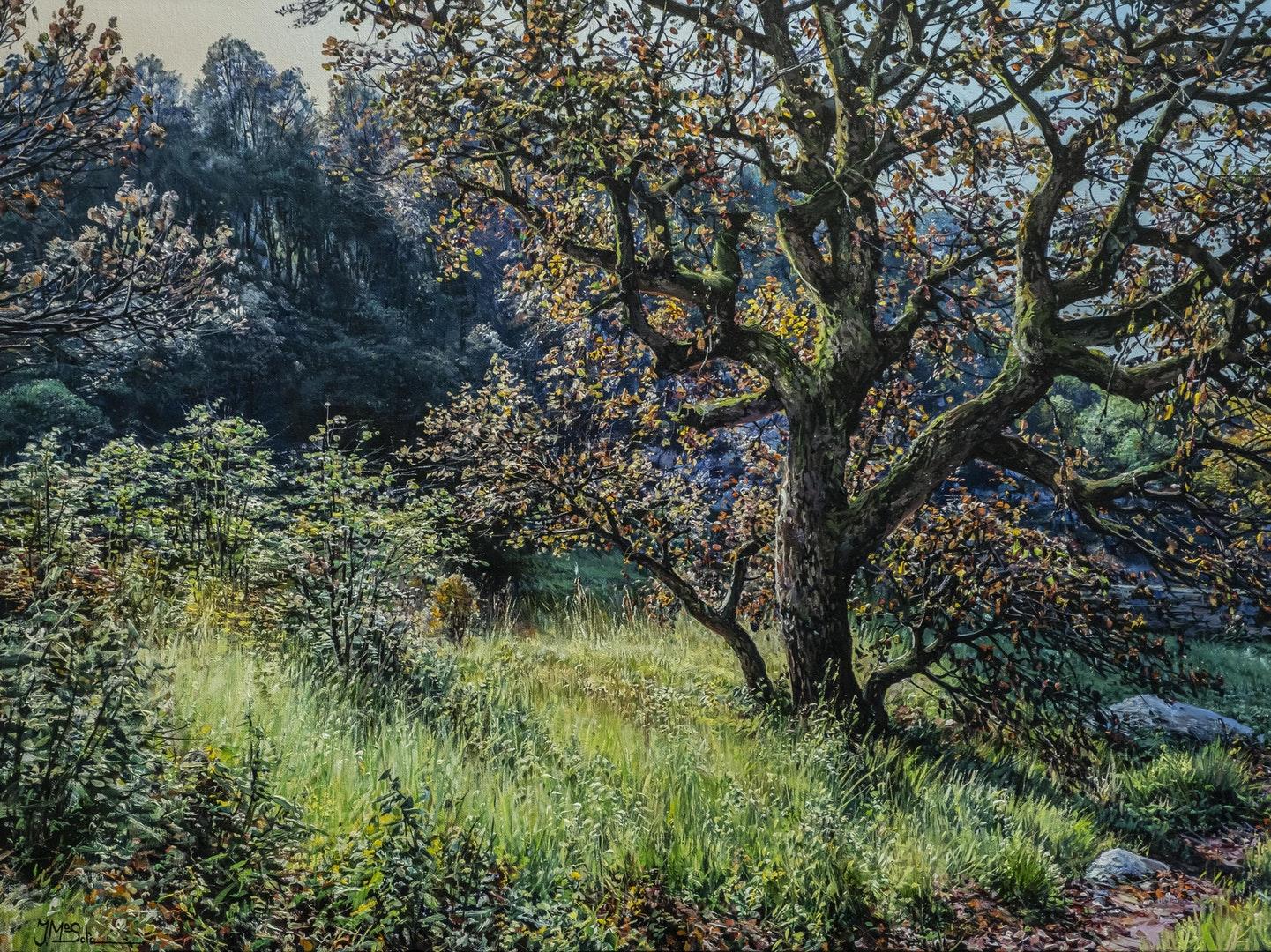 'The oak tree', Josep M. Solà, Oil on linen, 60 x 81 cm