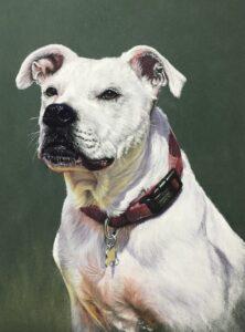 'Marnie', Sandra Jones, Soft pastels and pastel pencils on pastelmat, 36.5 x 28.5 cm